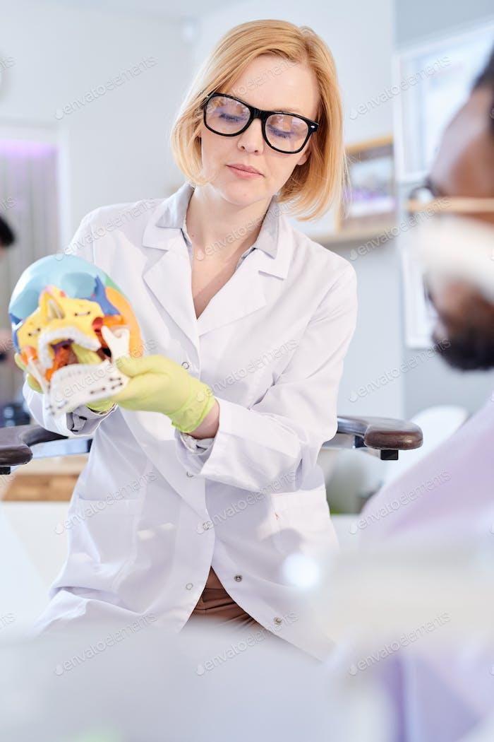 Weibliche Zahnarzt hält Schädel Modell