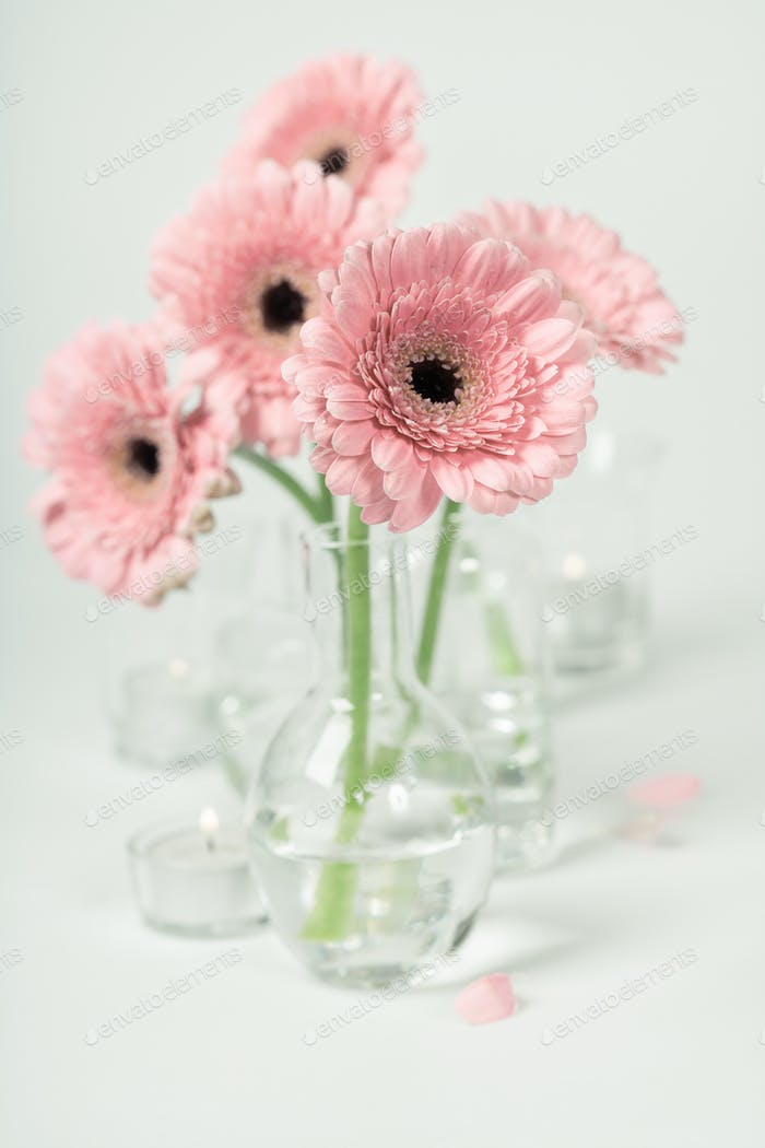 Pink gerberas in vases on white background, close up
