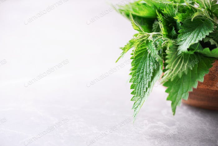 Stinging nettles, urtica. Green nettle leaves in wooden pot on grey background. Alternative herbal