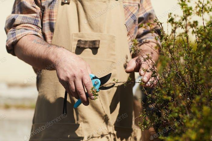 Unerkennbare Gärtner Clipping Pflanzen