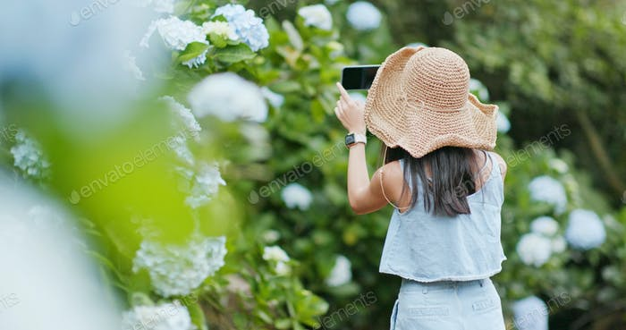 Woman taking photo on Hydrangea farm