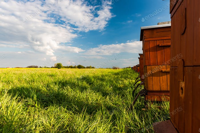 Traditional Wooden Beehives Outdoor in Meadow. Bees Collecting Pollen From Flowers