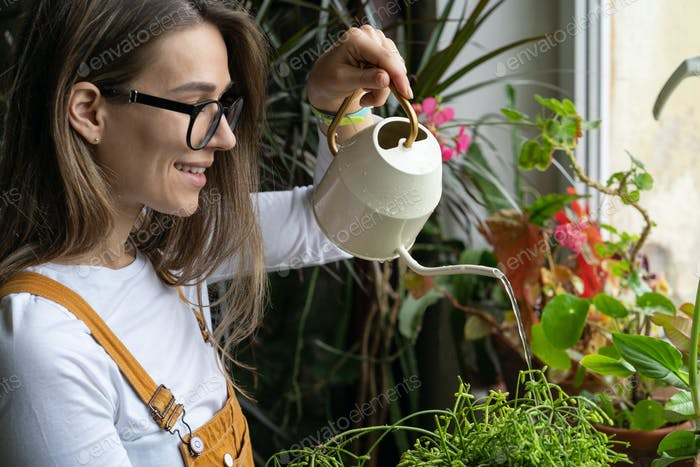 Woman gardener watering potted plant on windowsill in green house. Hobby, home gardening