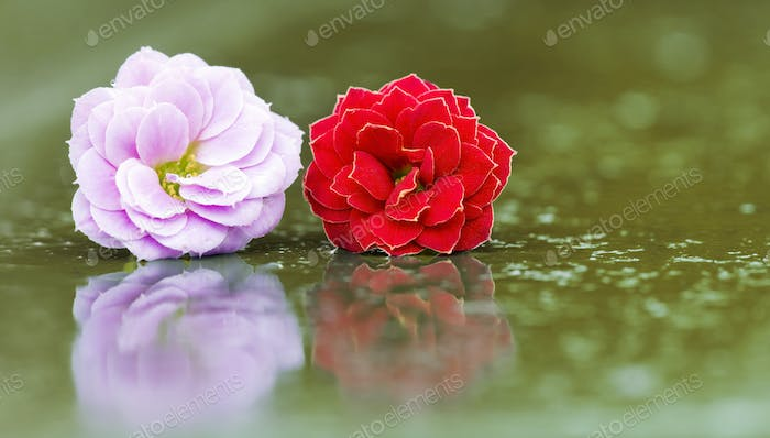 Springtime, spring concept - pink and red flowers