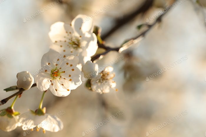 Spring flowers blooming on a tree