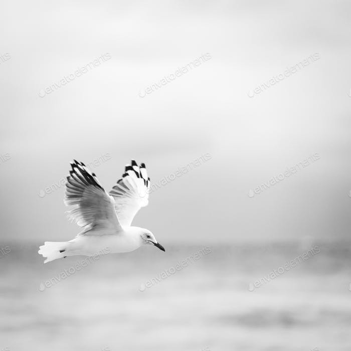 Bird Flying Over Ocean Black and White