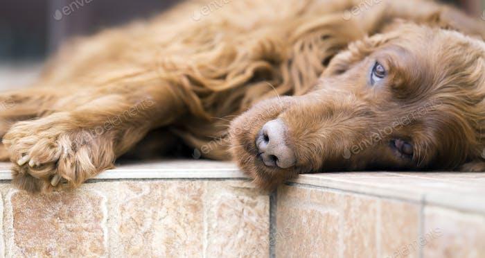 Schöner Hund Nahaufnahme