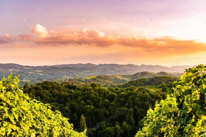 Vineyards in Slovenia close to the border with Austria south styria.