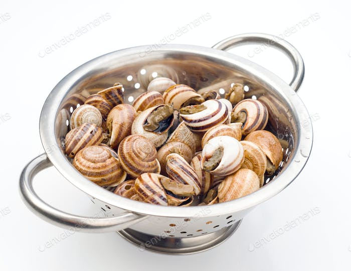 uncooked snails in metal colander on white background