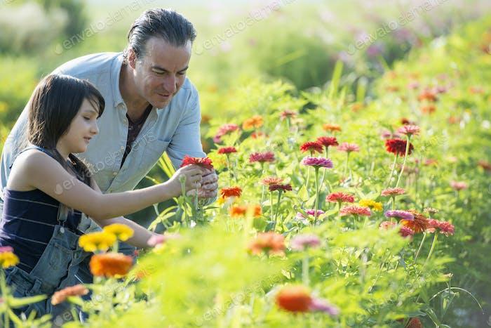 Sommer auf einem Bio-Bauernhof. Ein Mann und ein Mädchen in einem Blumenfeld.
