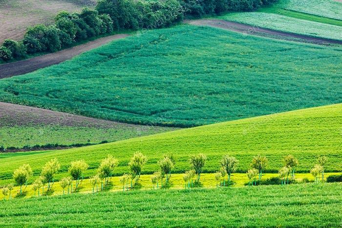 Apfelbäume in sanften Feldern von Mähren