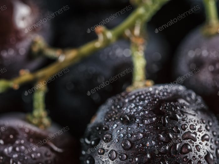 dark grape with water drops close up