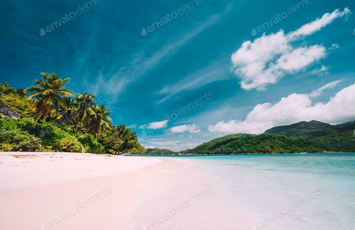 Vacation holiday panoramic background wallpaper. Palm trees on tropical secluded sandy beach. Blue