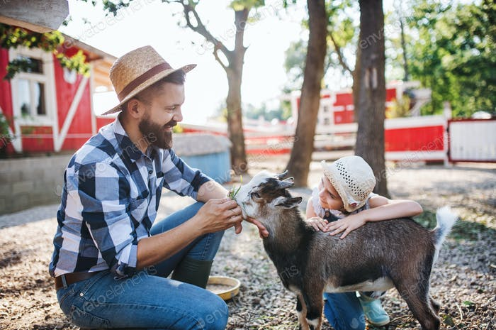 A father with small daughter outdoors on family farm, feeding animals