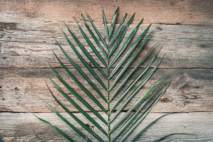 Green tropical palm leaf on wooden planks background. Exotic branches over vintage texture. Top view