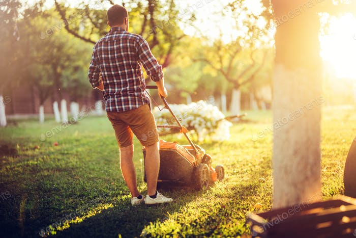 Gardener working with lawnmower and cutting grass during summer season