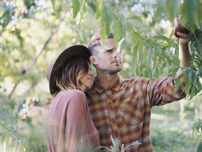 Apple orchard. A couple standing by an apple tree, holding an apple.