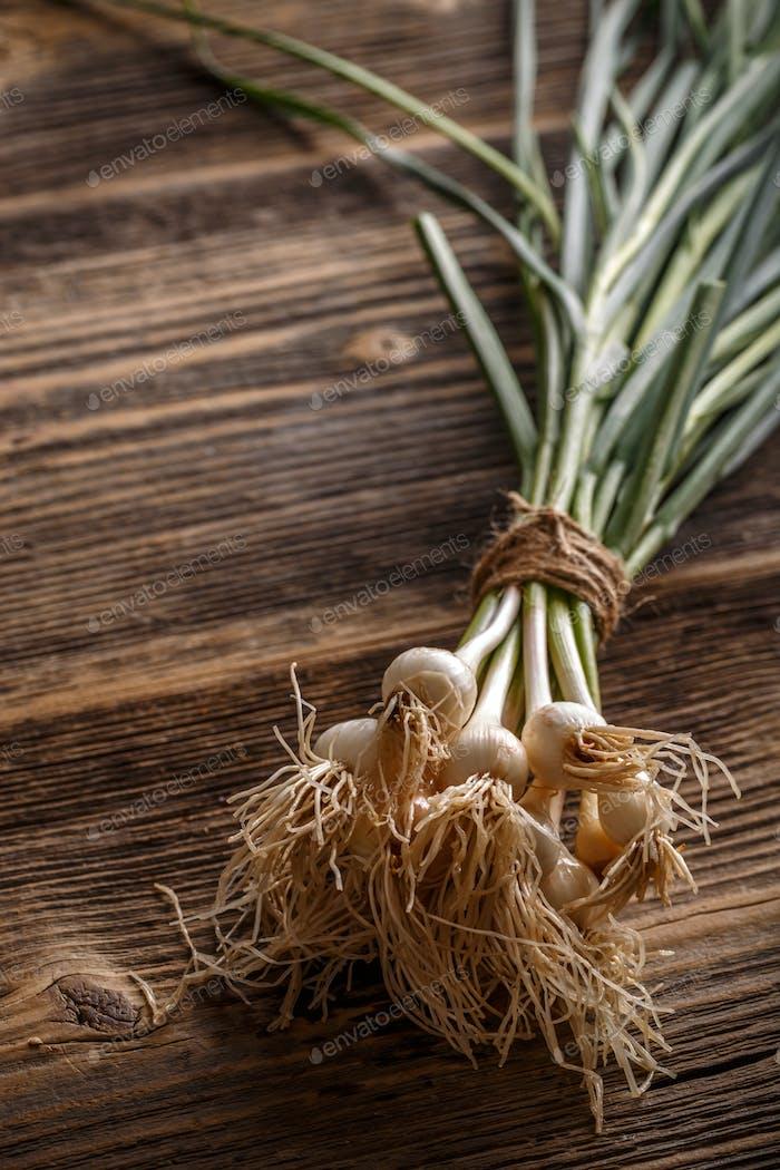 Spring organic garlic