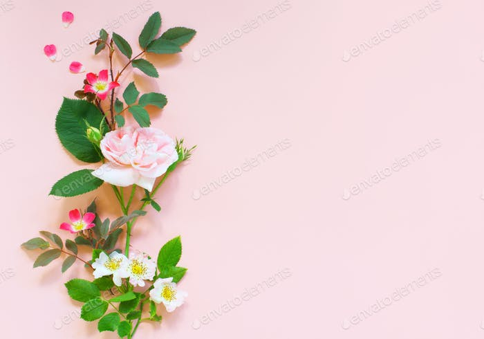 Tender Background with Roses