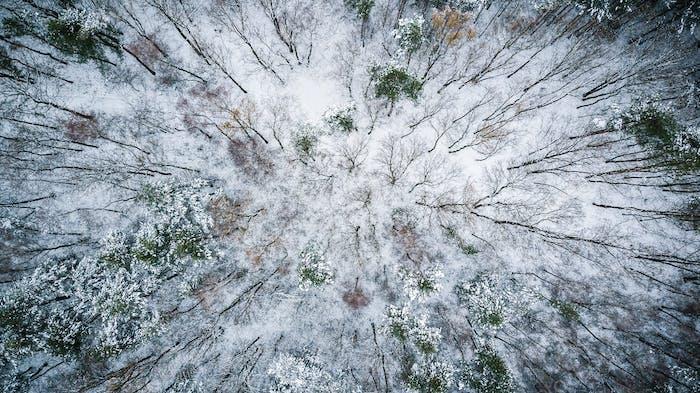 Wintersaison von oben nach unten Blick über den Wald
