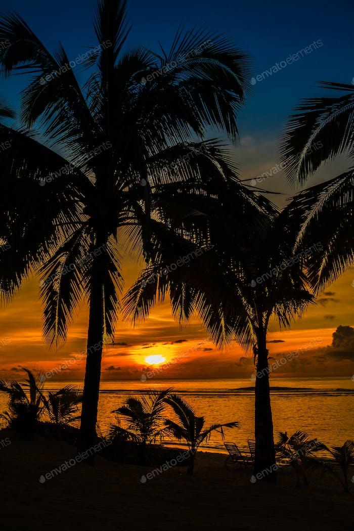 Strandpalmen sihouetted und Sonnenuntergang, Rarotonga, Cookinseln