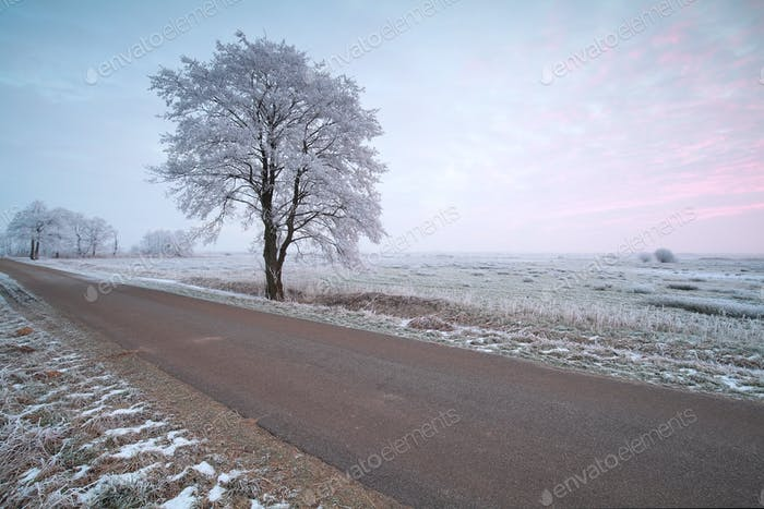 countryside road and frosted tree at sunrise