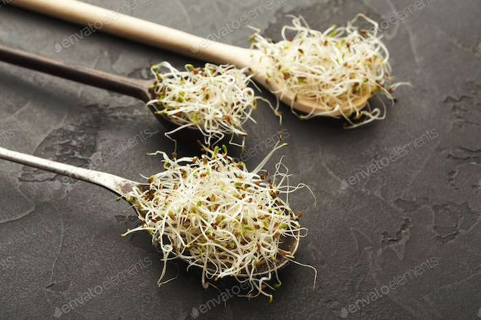 Micro greens sprouts in wooden spoons at black background with copy space