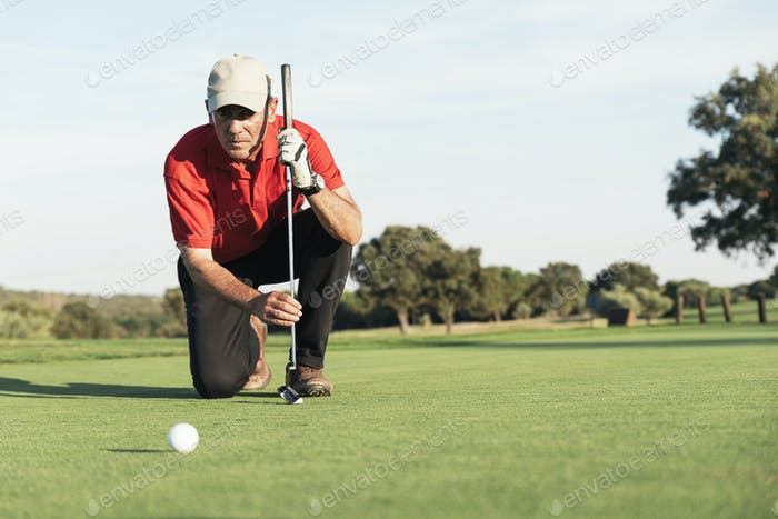 Senior golf player concentrating for putting on green.