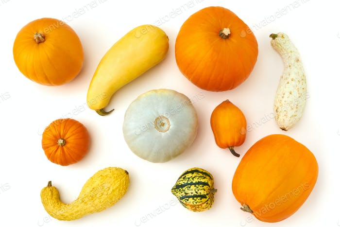 Overhead Autumn Still Life Composed Of Different Types Of Pumpkins On White Background
