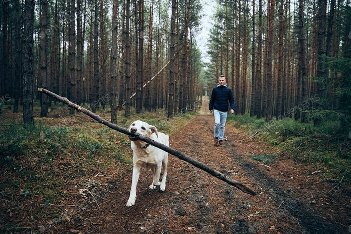 Man with dog on pathway in the middle of forest