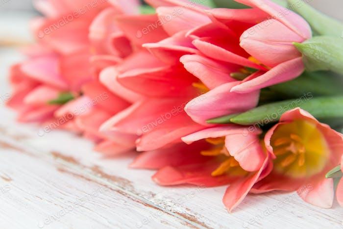 Manojo de tulipanes rosados