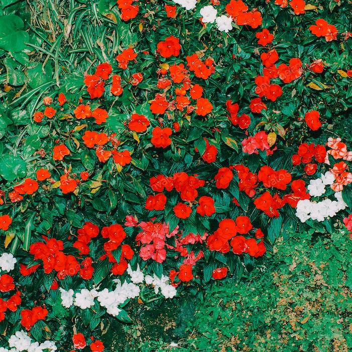 Red Flowers background Minimal art design
