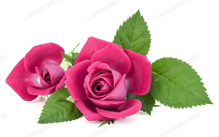 rosa Rose Blumenstrauß isoliert auf weißem Hintergrund Ausschnitt