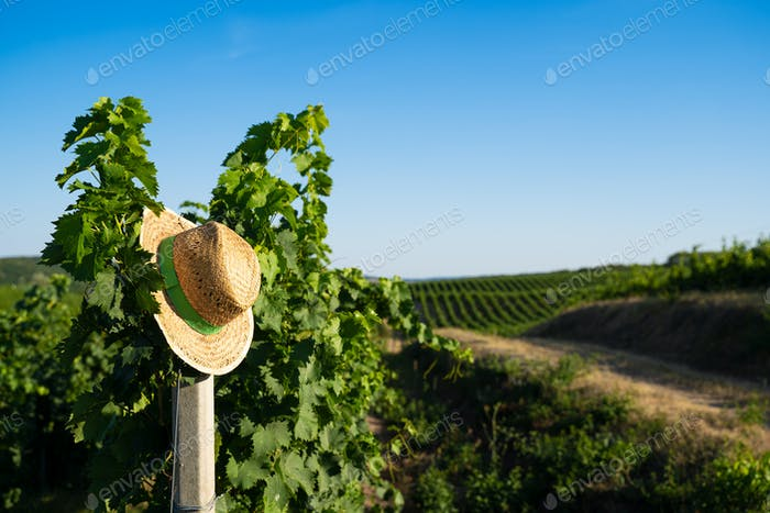 Sombrero de paja de mimbre colgado en un poste en un viñedo