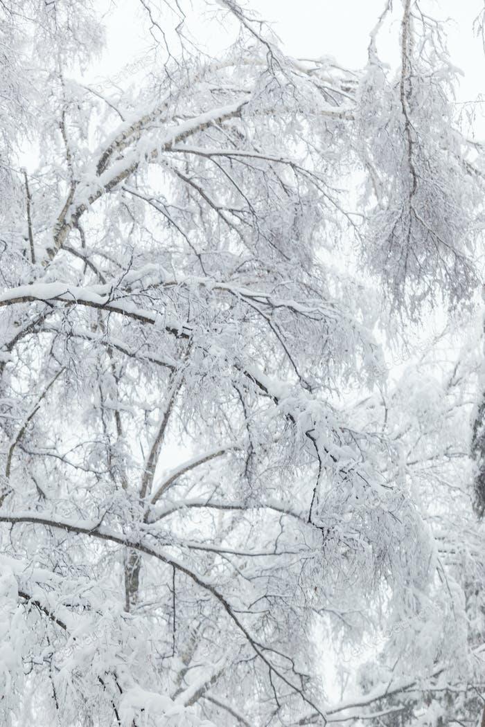 Bäume bedeckt mit Raureif und Schnee