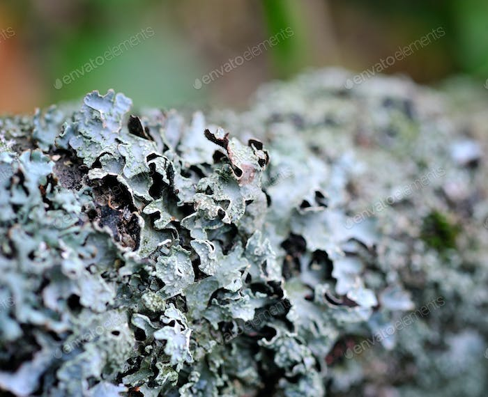 Close-up view lichen on a tree