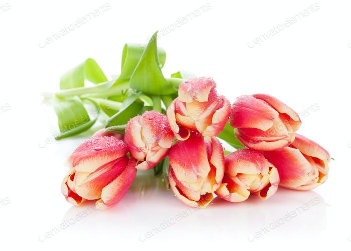Bunte Tulpen Bündel