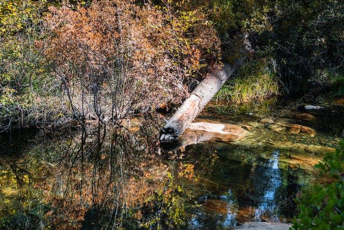 Colorful creek shoreline in Calaveras Big Trees State Park, California