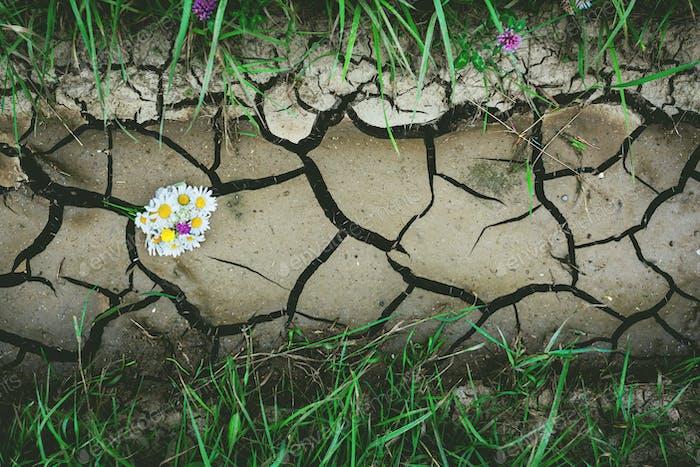 Hintergrund mit trockenem Riss Boden mit Blumen und grünem Gras
