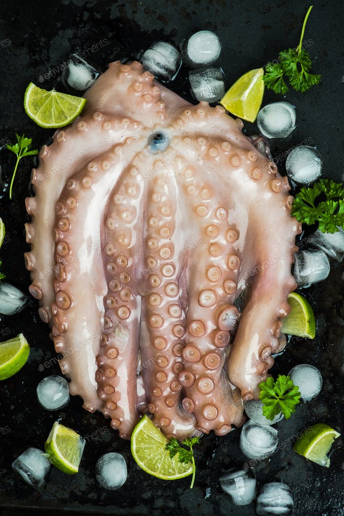 Whole raw octopus seafood