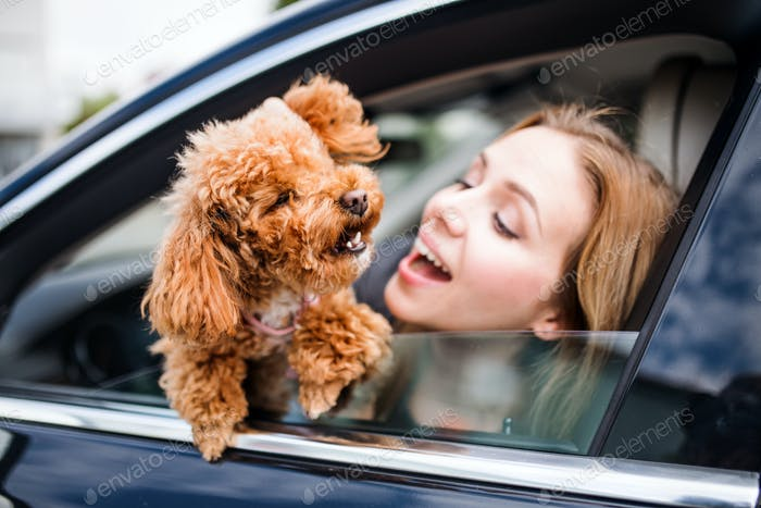 Young woman driver with a dog sitting in car, looking out of window