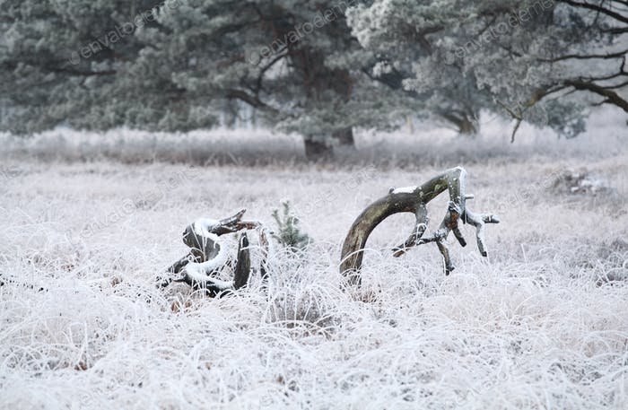 frosted meadow in winter