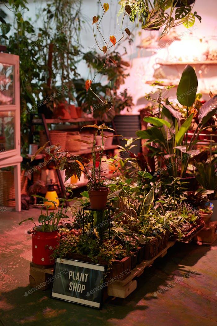 Green garden at home