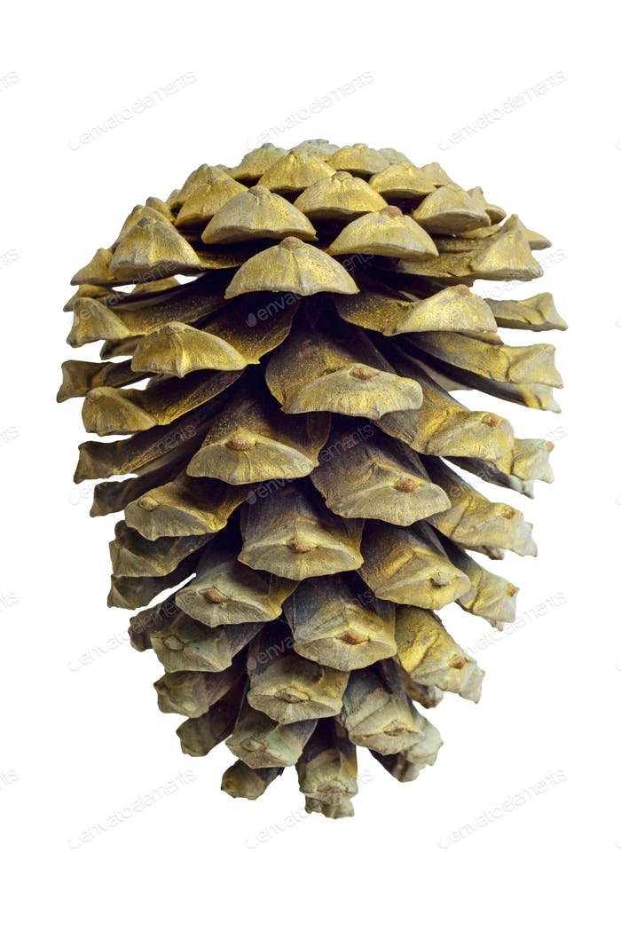 Christmas Golden Pine Cone decoration isolated on white