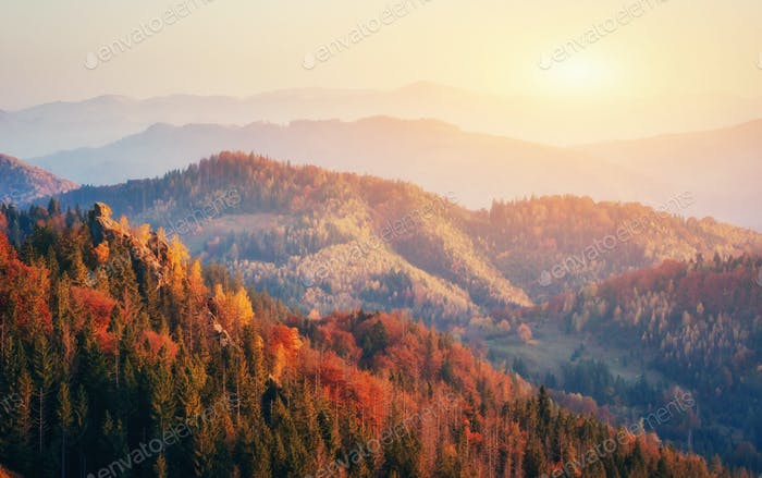 Beautiful view of the forest on a sunny day.