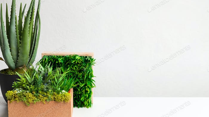 Grassy flowerbox and potted aloe vera plant