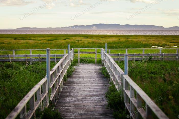 Erstaunlich Ruhe Landschaft Blick auf ein Sumpf von einem Wald Balkon