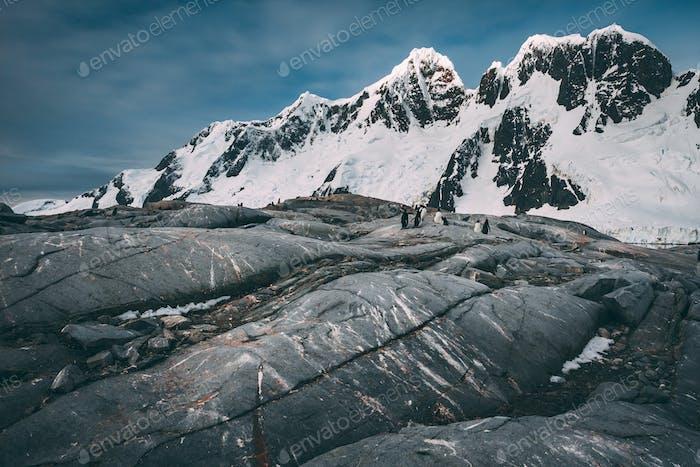 Uralte kühle Lavastrom. Antarktische Berge