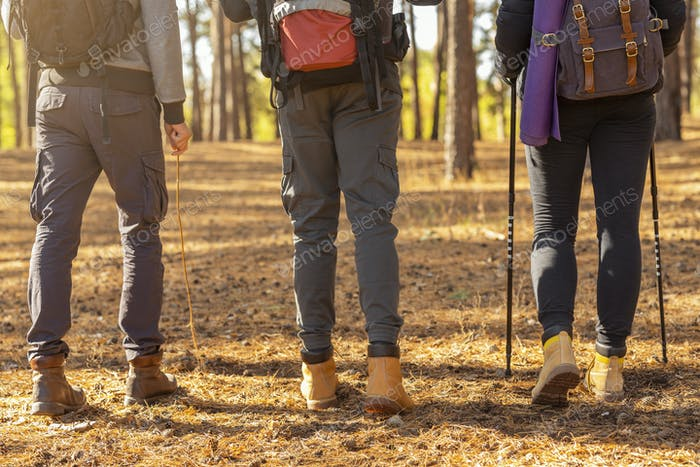 Legs of three hikers crossing forest in autumn