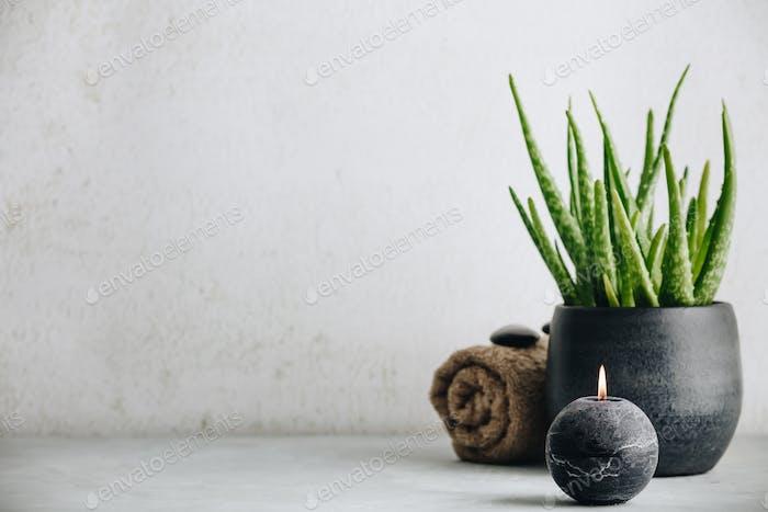 Natural Spa Konzept mit Aloe Vera, Platz für Text und Logo